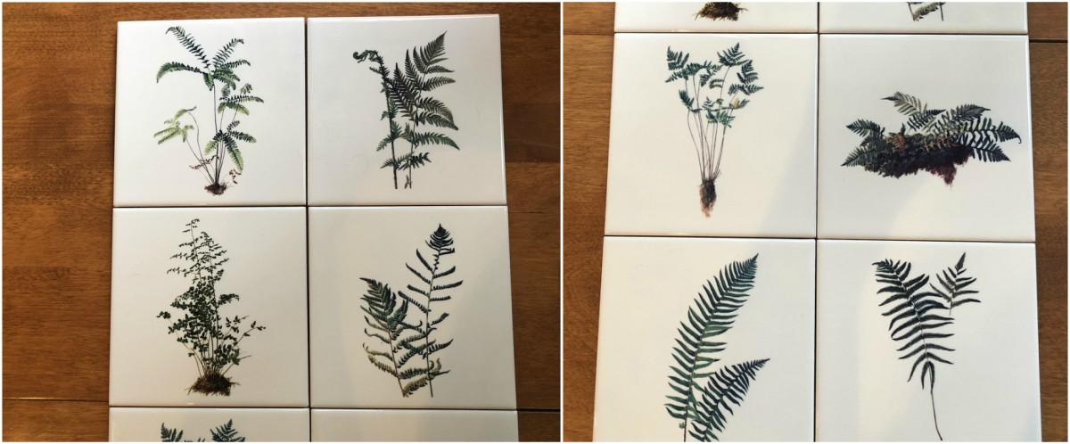 California and Northwest Ferns