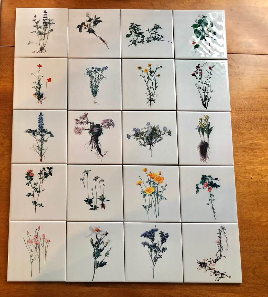 California wildflower tiles