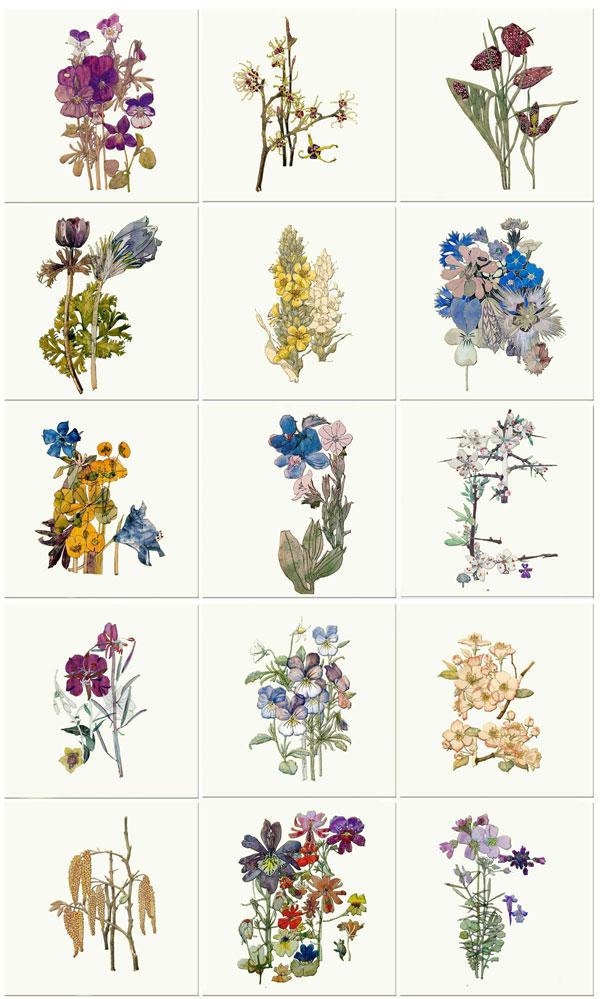 Charles Rennie Mackintosh Flowers, 6 inch ceramic tiles
