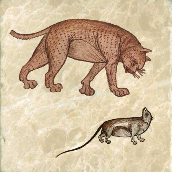 Twelfth century cat stalking