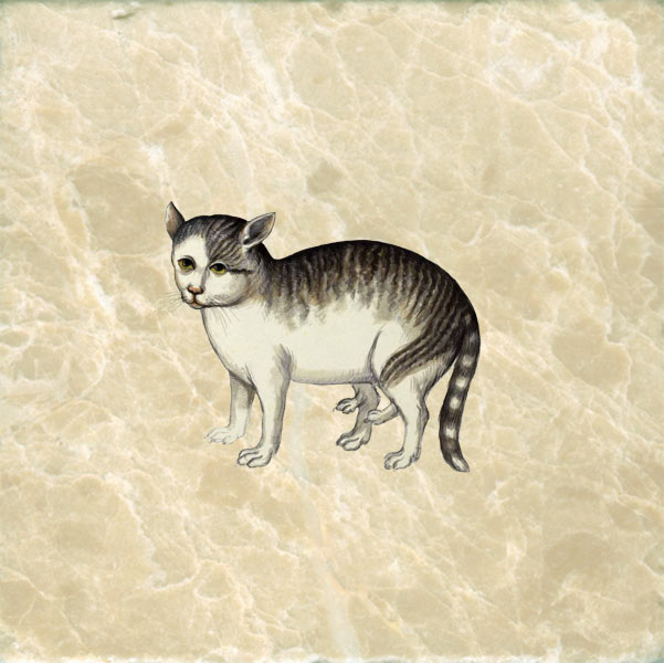 Ulisse Aldronvadi cat with extra legs from Historia Monstera