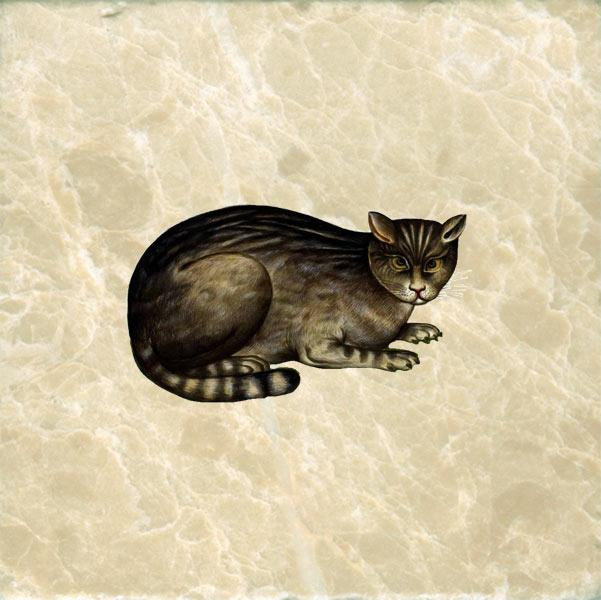 Ulisse Aldrovandi, Syrian Cat