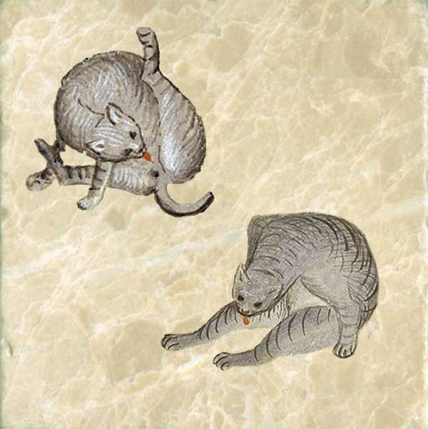 Cat hygiene, Morgan Library. 15th century.