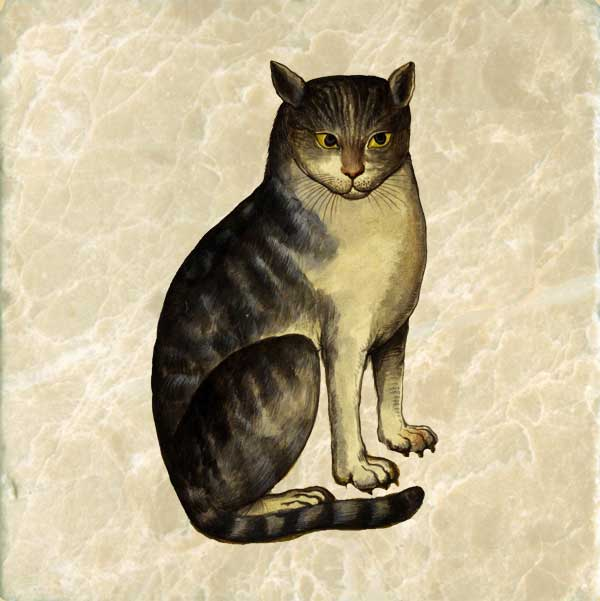 Ulisse Aldrovandi, 16th cent. Italian cat