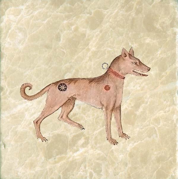 The golden-hound of Zeus.