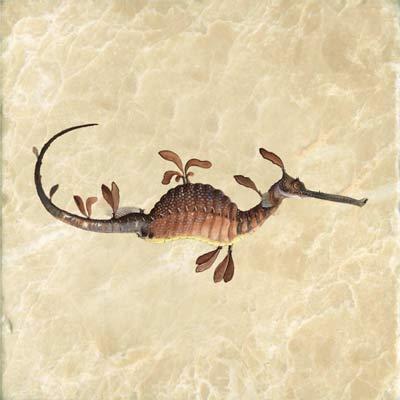 William Buelow Gold, 1832, Leafy Sea Dragon