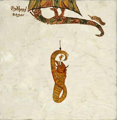 Two Norse dragons (Old Norse, dreki): Nidhoggr, Norse dragon who gnaws at the roots of Yggdrassill, the world tree. And Jormungandr, the Midgard serpent. Thor used the head of Hymir's largest ox as fishing bait. From a 17th century Icelandic manuscript.