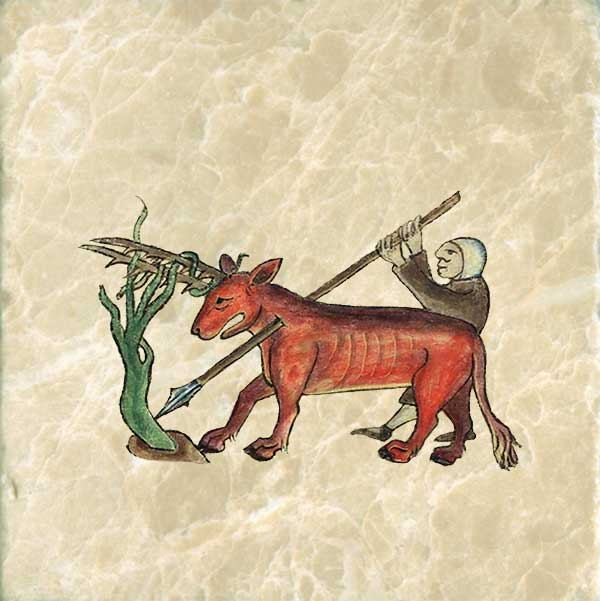 The antelope is an animal so wild that no hunter can catch it, except when it goes to the Euphrates River to drink, and become entangled in the branches there. From the Bestiary of Anne Walshe, 1400-1425.