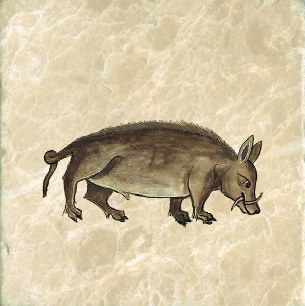 A boar from the Bestiary of Anne Walshe.  Anne's boar is hairy with tusks pointing up and down.