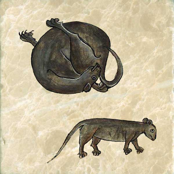 Curled up cat from the Bestiary of Anne Walshe.  A mouse's liver grows larger at the full moon.