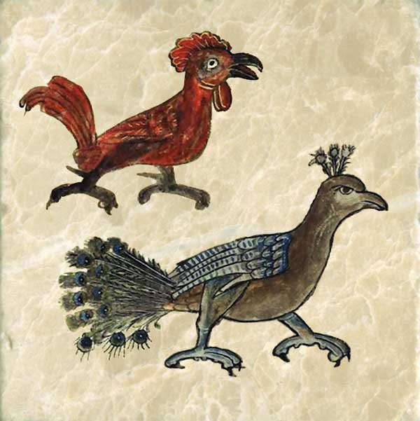 The cock is an intelligent bird that can tell time. Lions are afraid of a white cock.   The peacock's voice causes terror in its listener. Its long green tail is adorned with eyes.