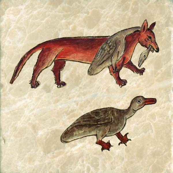 When it wants to catch a bird, the fox rolls in mud to appear covered in blood and lies still to appear lifeless. Anne's red fox has stolen a goose.