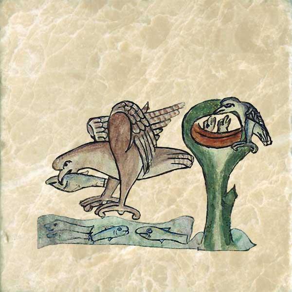 Bestiary of Anne Walshe: Ibis.