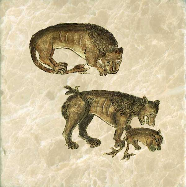 Most bestiaries begin with the lion, the King of Beasts, and it is associated with Jesus. Lions sweep away their tracks with their tufted tail and sleep with their eyes open.