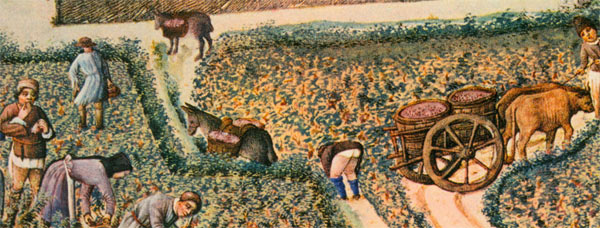 September detail showing vineyards next to the tournament track and harvest in progress. Underwear was not necessary in the late summer heat.