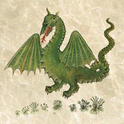 Historia Plantarum dragon, first Latin translation, circa 1483