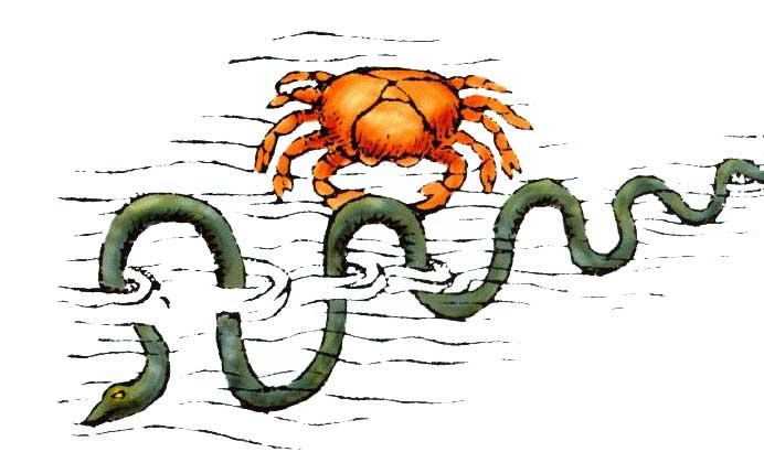 Vermis, sea snake