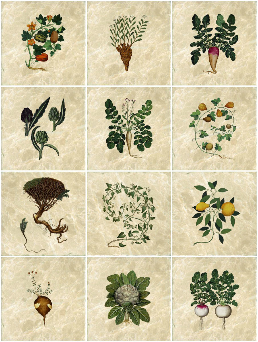 Medieval herb tiles, 16th century Italy, Ulisse Aldrovandi