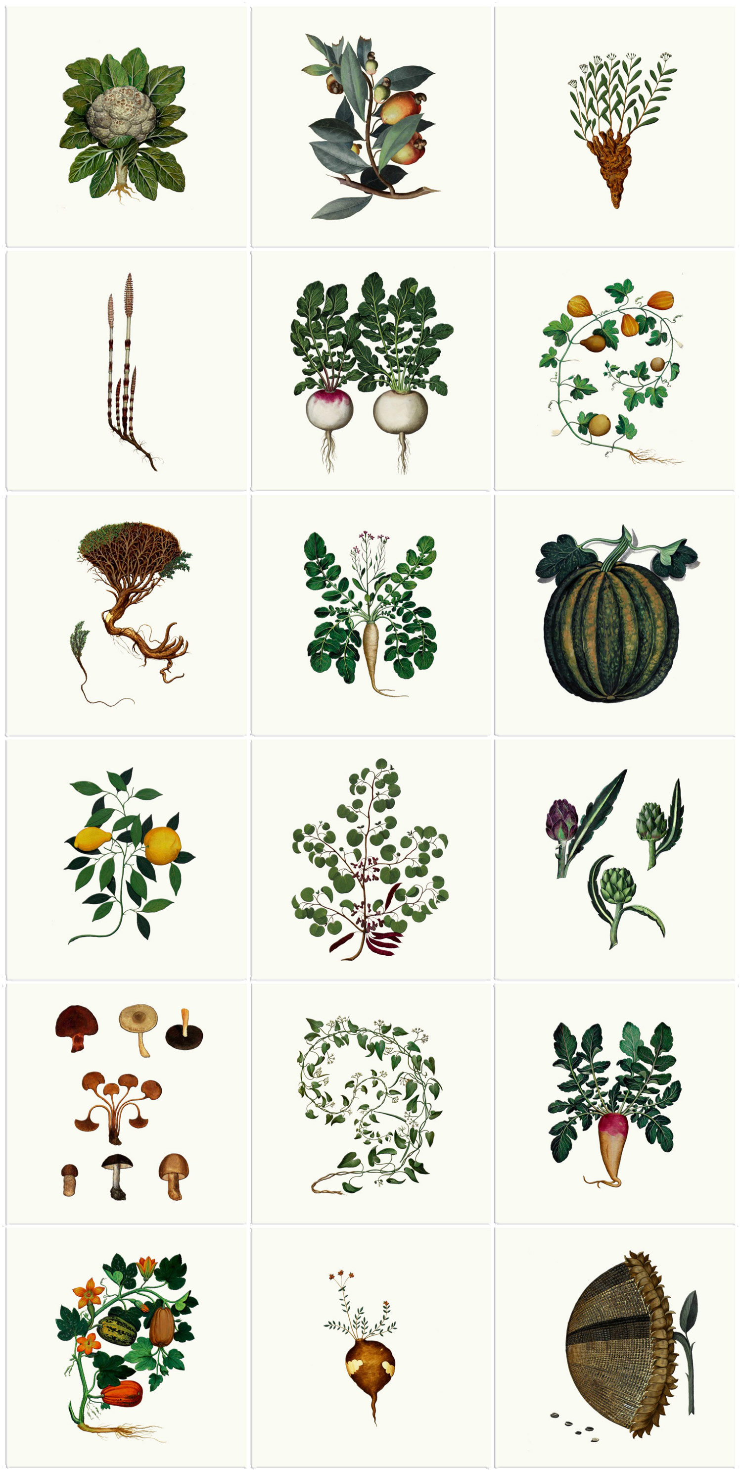 Medieval Italian Kitchen Herbs And Vegetables Tiles