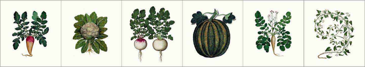 Medieval kitchen garden vegetables