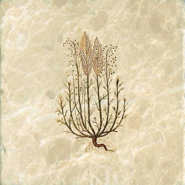 From De Marteria Medica: Artemesia or Wormwood, used in Absinthe. Medieval tiles for kitchen or backsplash.
