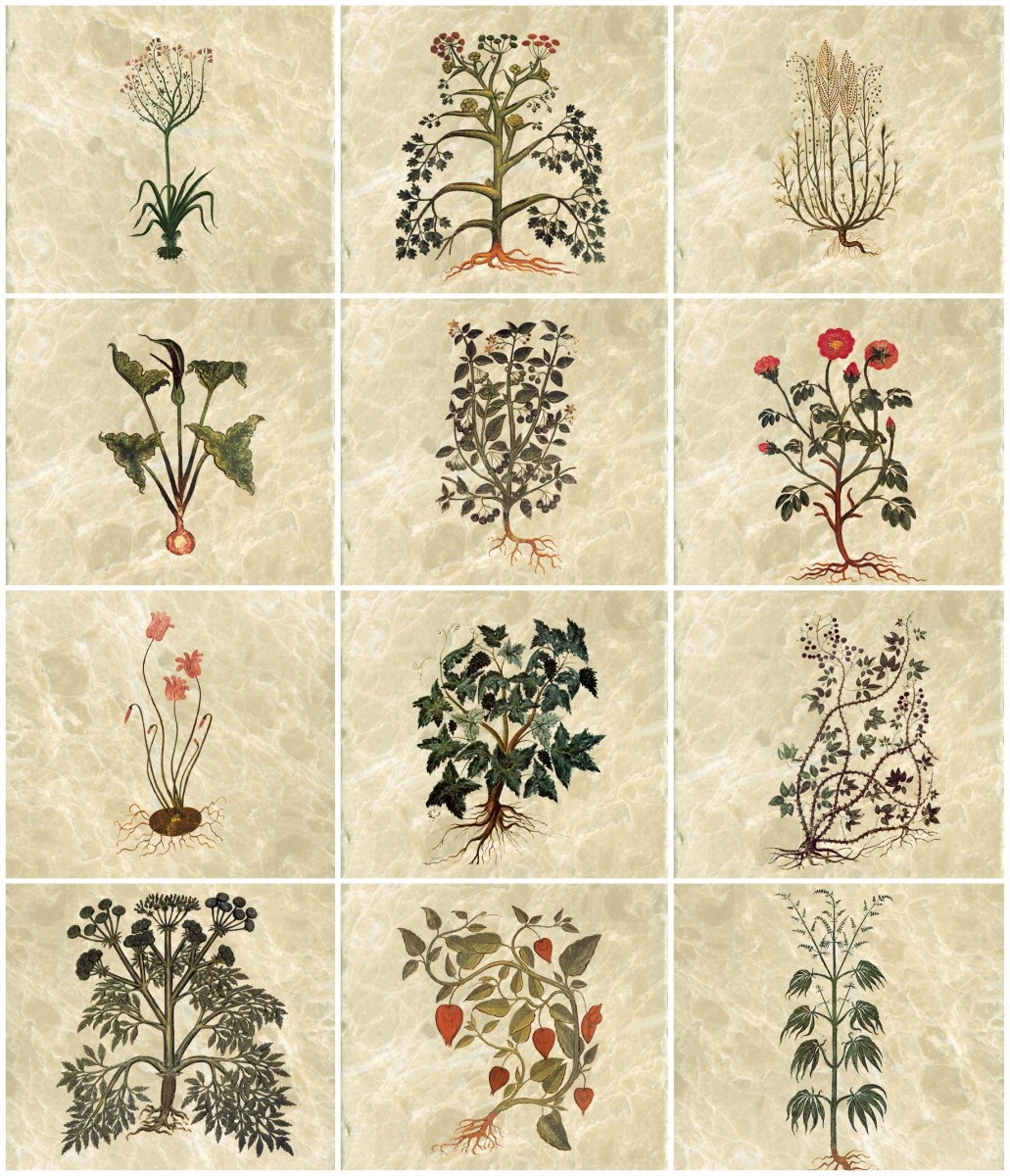 Medieval herb tiles, Vienna Dioscorides