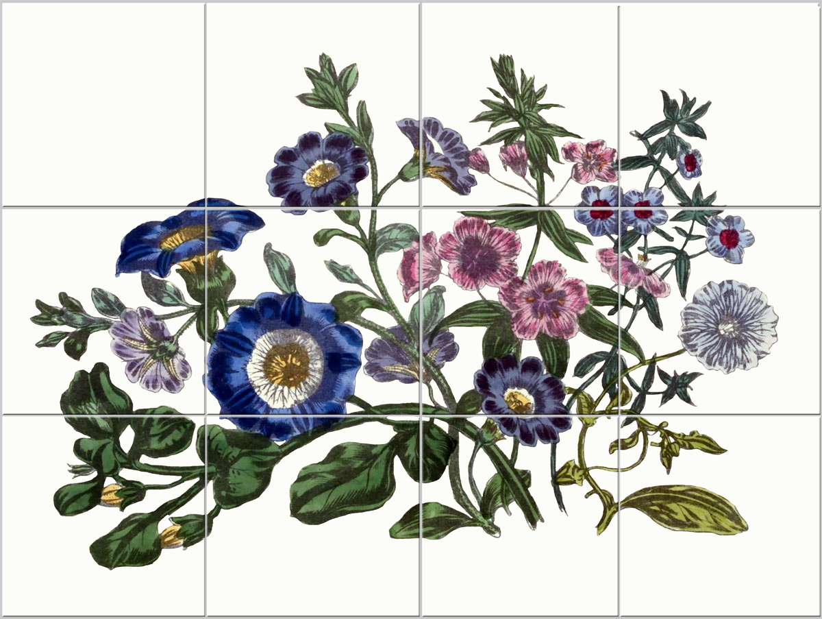 Twelve-tile Victorian botanical backsplash, Primroses and Bellflowers